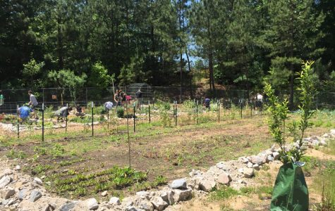 Wakefield garden: changing the community one tomato at a time