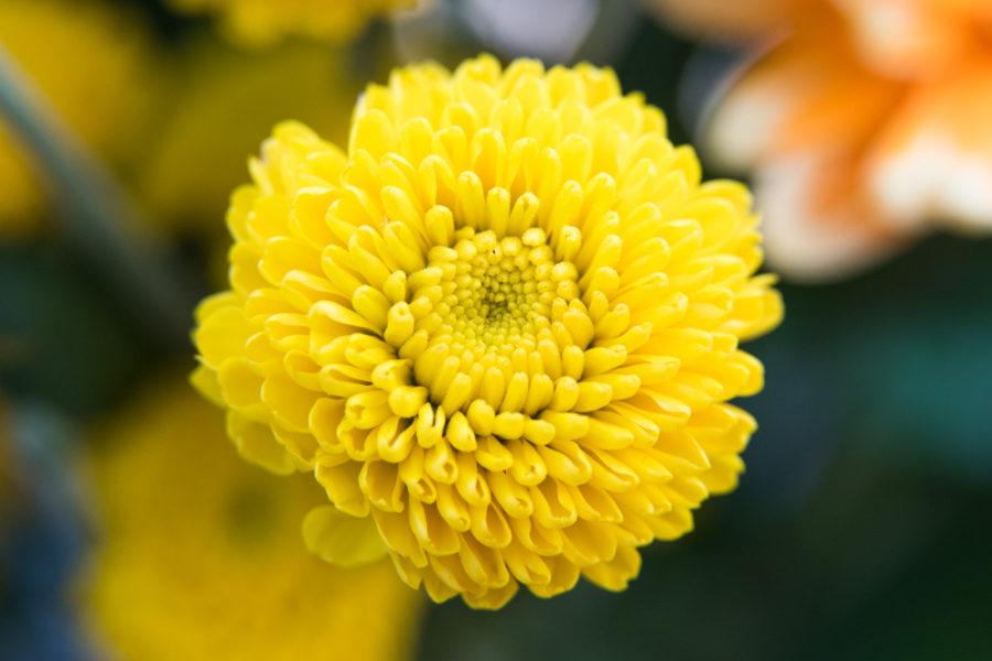 flower (1 of 8)