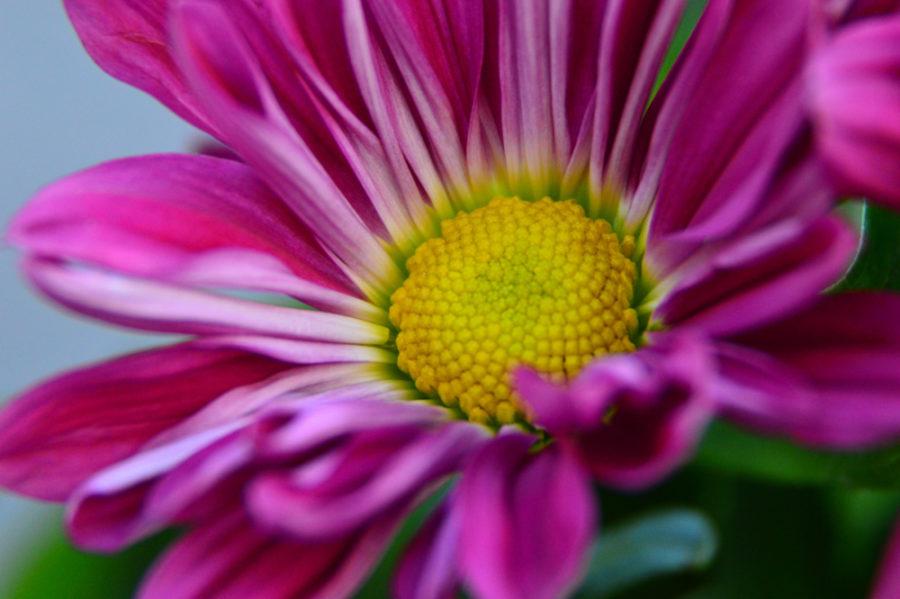 flower (2 of 4)