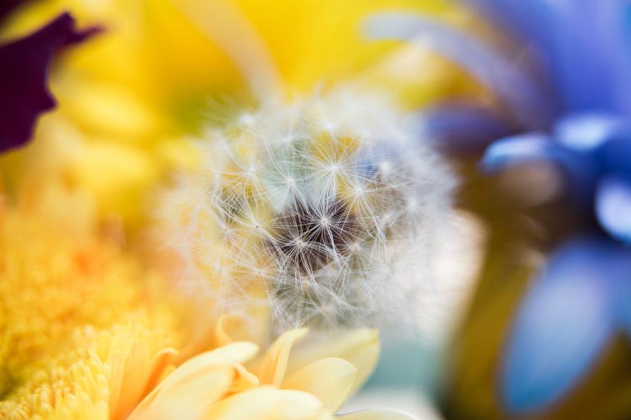 flower (2 of 8)