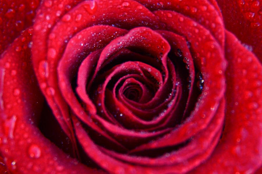 flower (3 of 4)