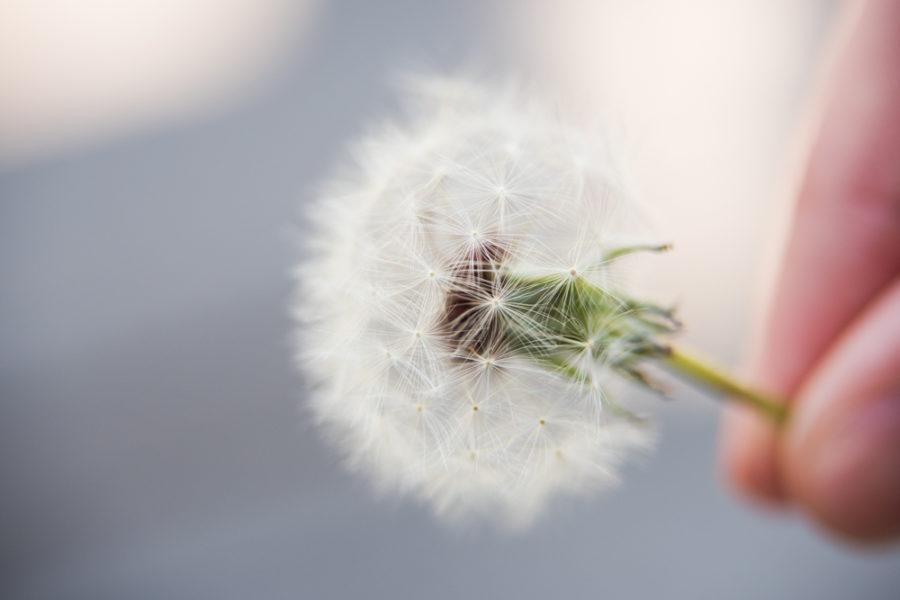 flower (3 of 8)