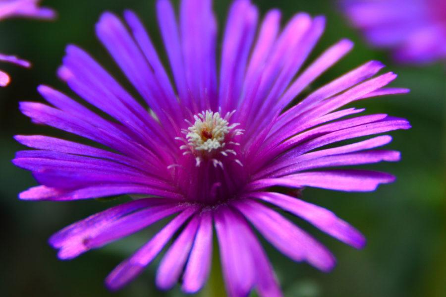flower (4 of 4)