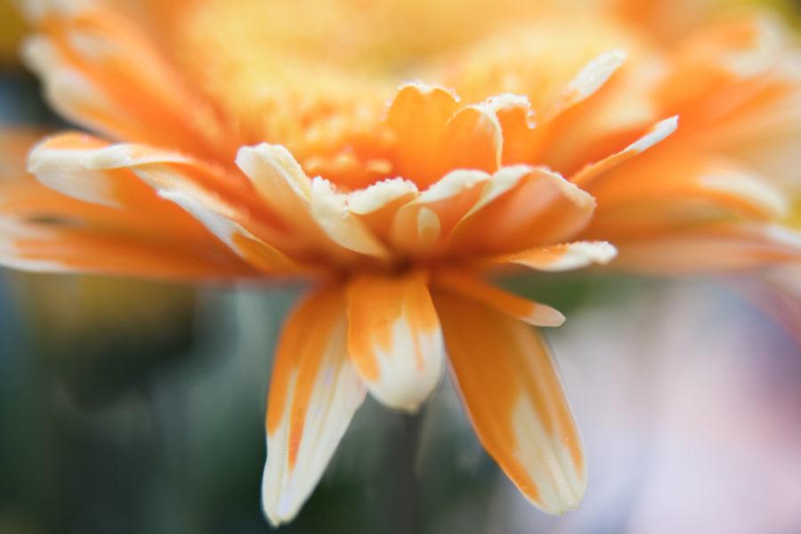 flower (4 of 8)