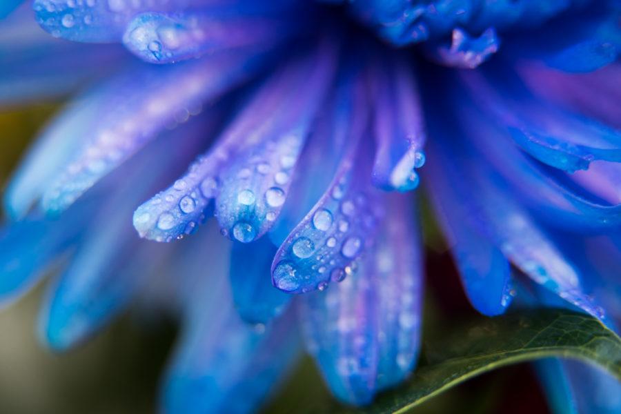 flower (5 of 8)