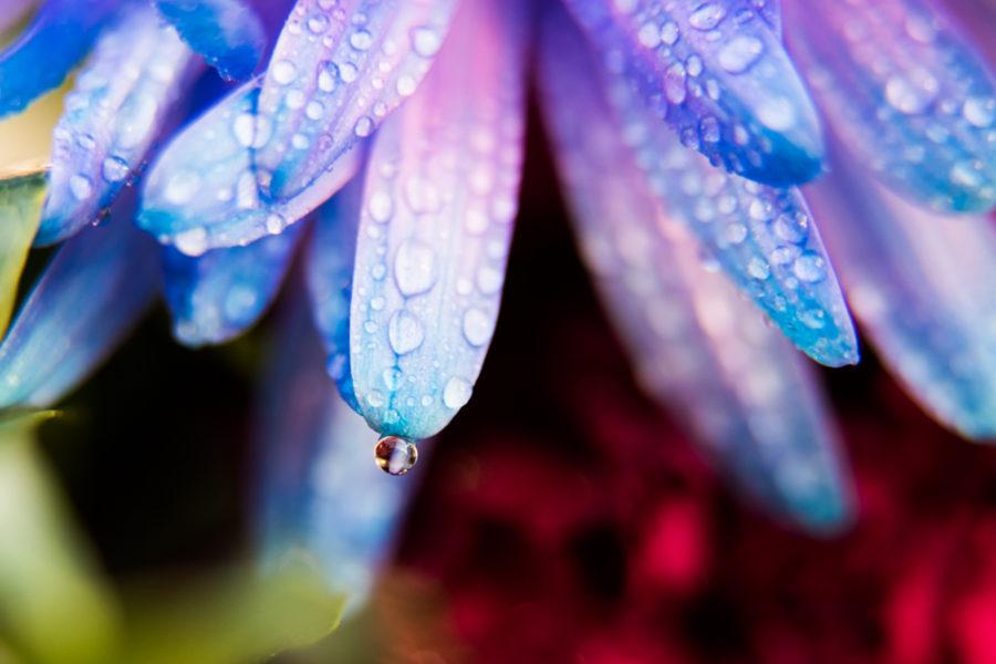 flower (6 of 8)