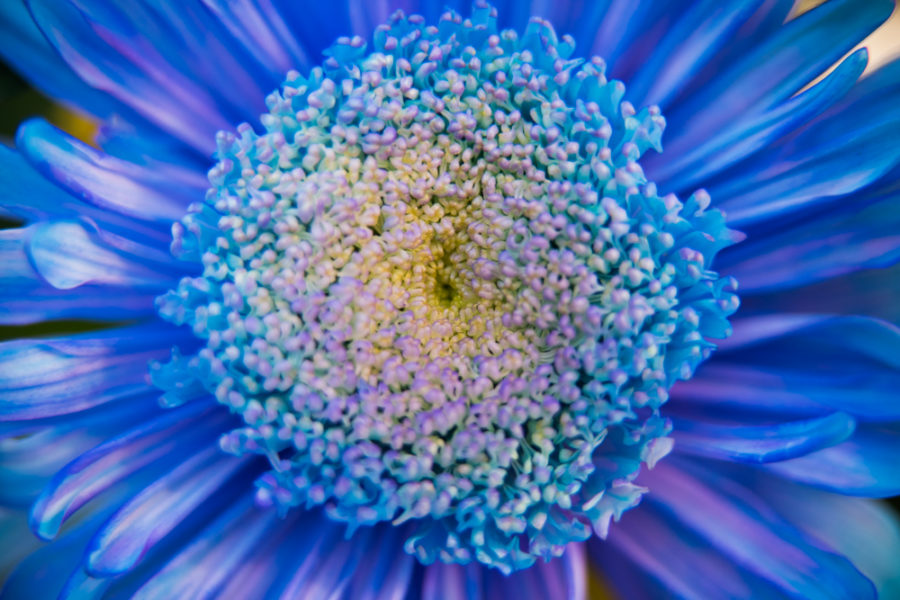 flower (7 of 8)