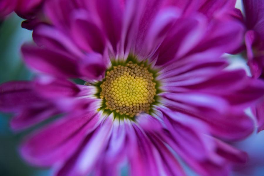 flower (8 of 8)