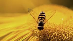 Bee Vaccine