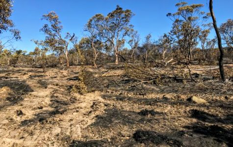 An area of land devastated by the wildfires in Western Australia.
