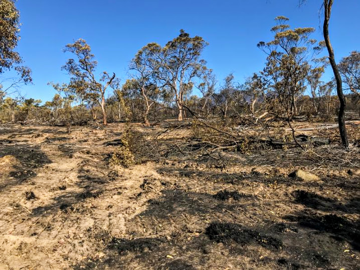 An+area+of+land+devastated+by+the+wildfires+in+Western+Australia.