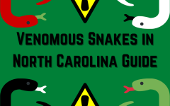 How can you differentiate the venomous and non-venomous snakes in North Carolina?